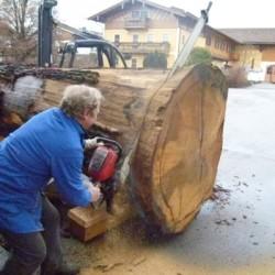Baum zuschneiden