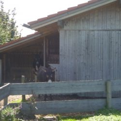 Unterstand - Eselhütte
