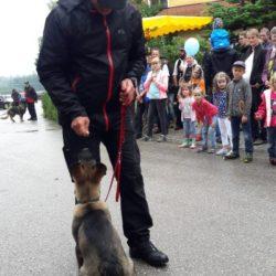 Vorführung der Ameranger Schäferhundestaffell